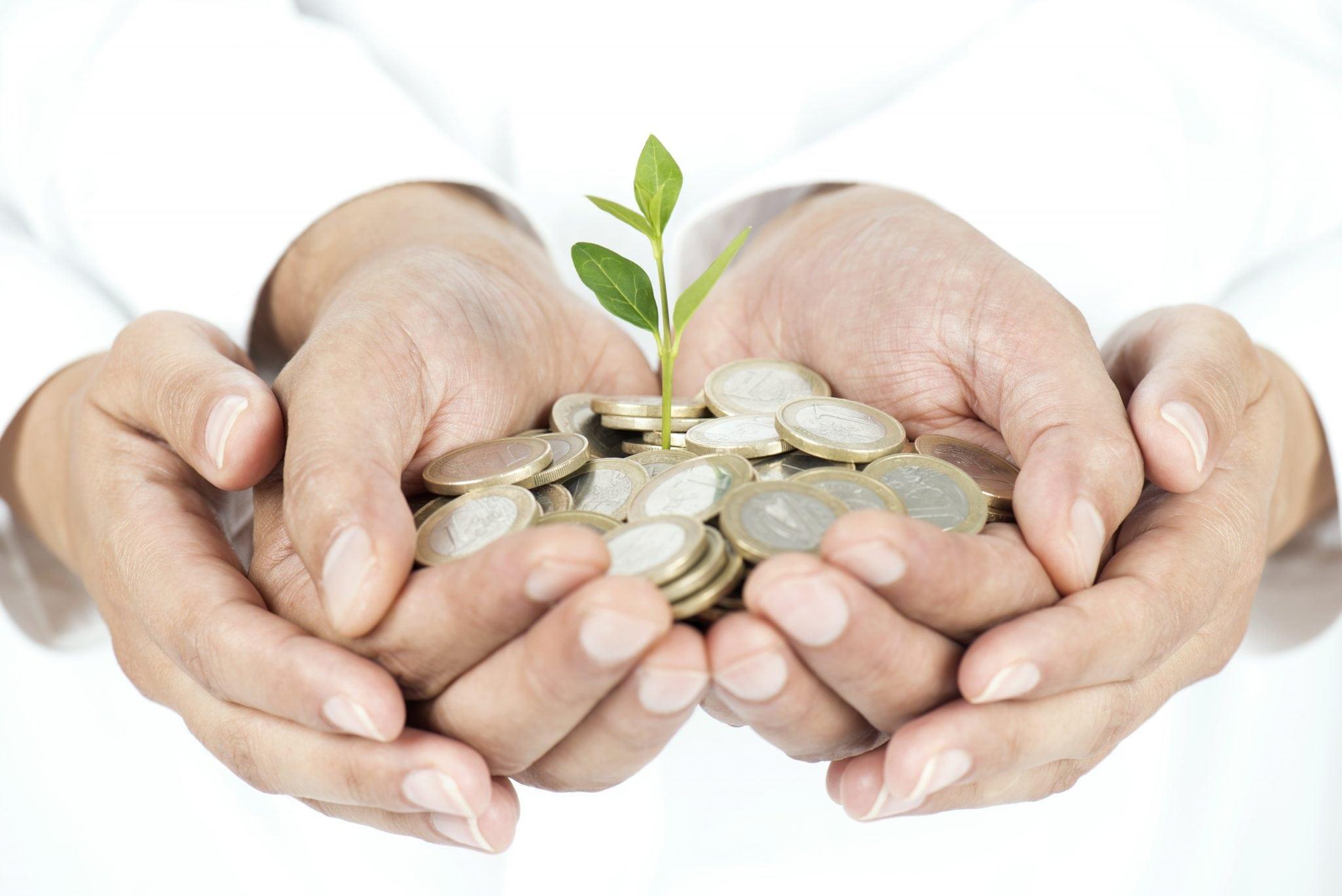 Money Tree in Hands